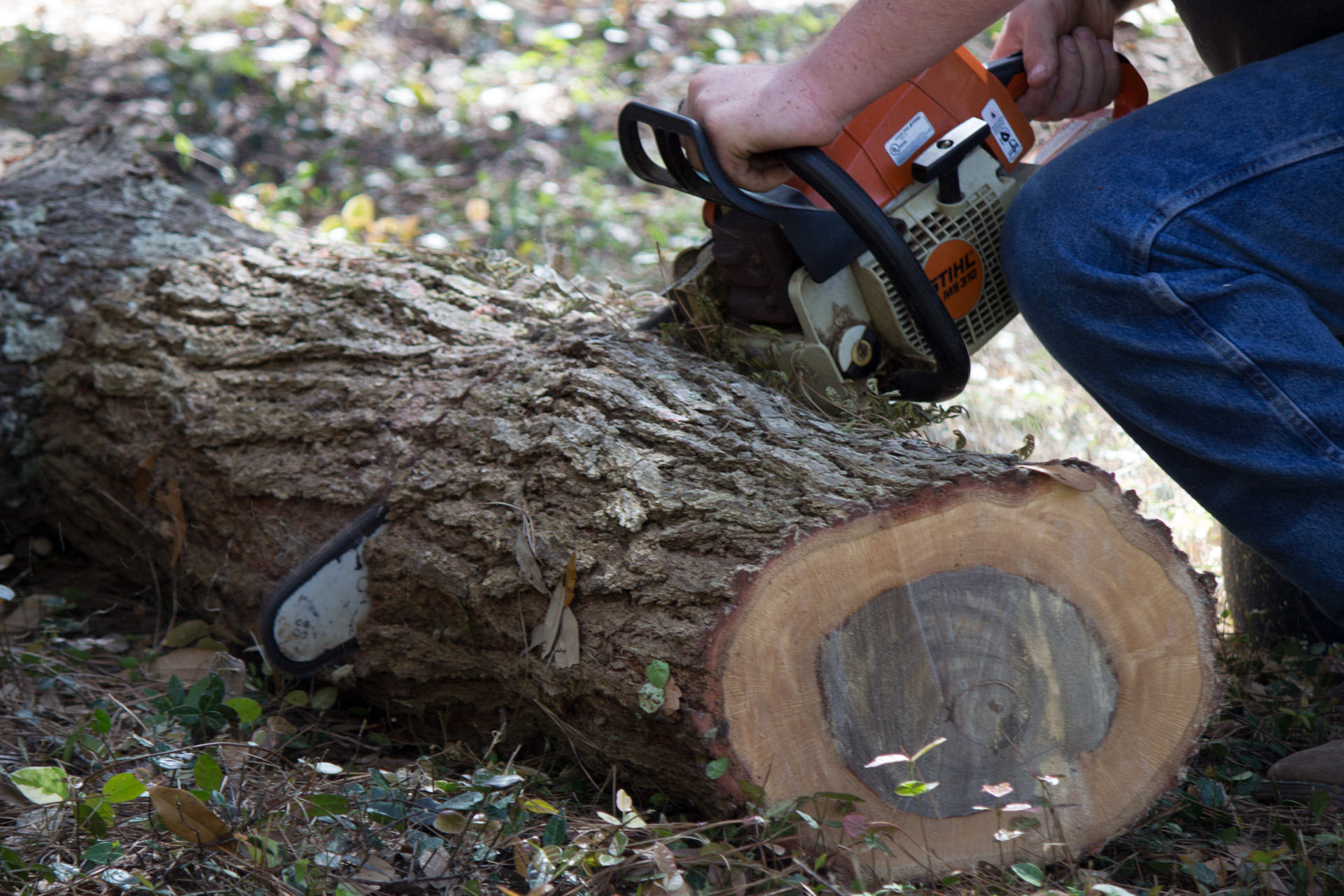 Nassau County Tree Surgeons - Local Arborists