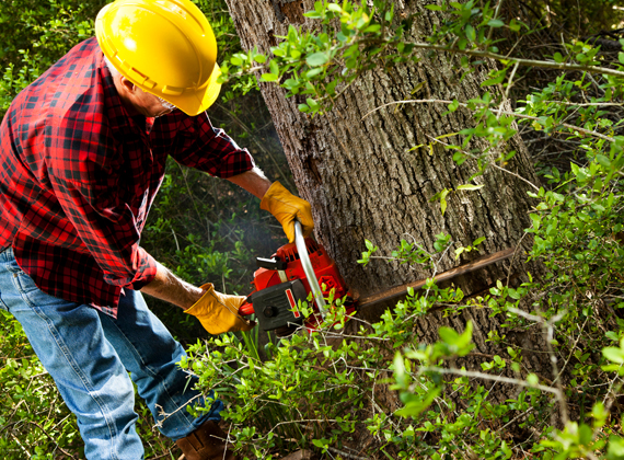 Tree Services - Tree Removal