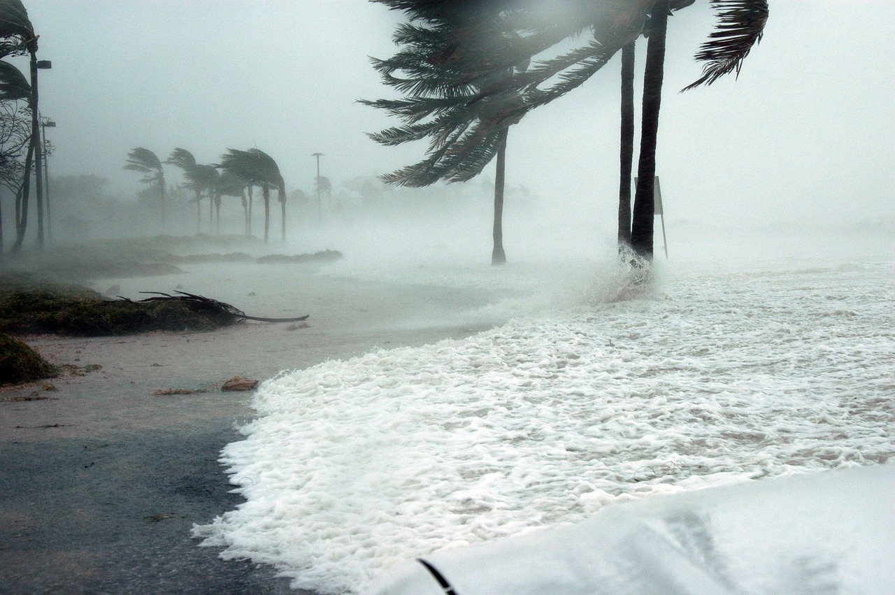 Florida Trees in Hurricane Season