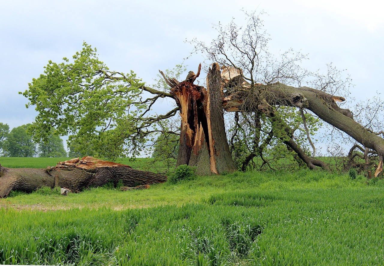 Storm Tree Cleanup